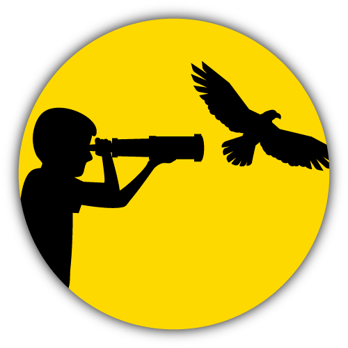 Avistaje de Aves